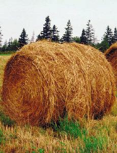 Agro- und Futtermittel